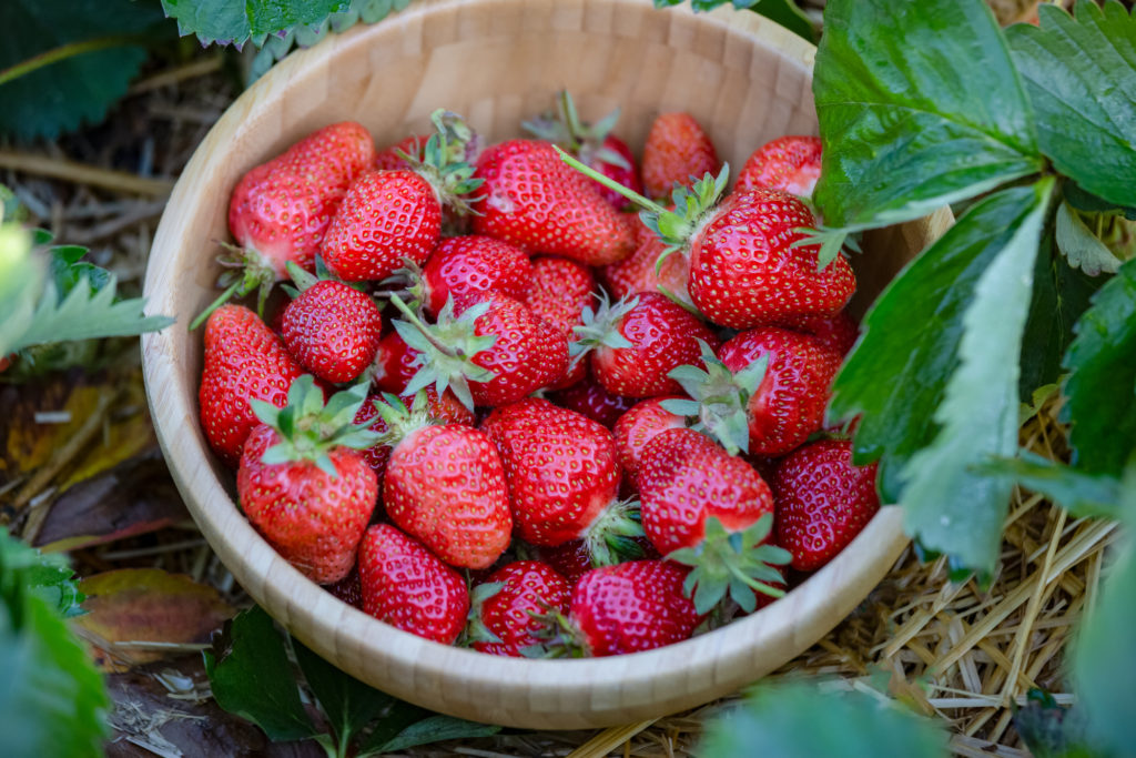 Strawberries In A Wood Bowl Put On Fruit Garden. Fresh Ripe Orga