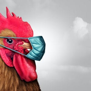 Is It Safe To Eat Chicken During Bird Flu? Explained